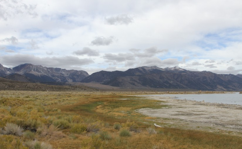 2: Plants of the Mono Basin