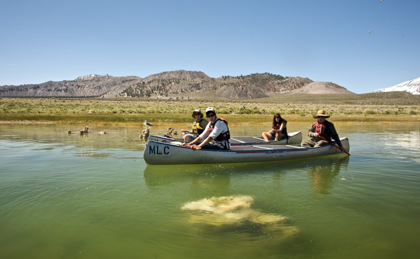 5: Mono Lake's unique water